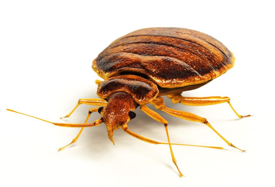 Bed Bugs Bat Bugs Bird Bugs Men In Black Pest Control